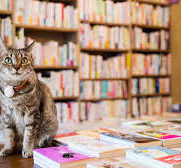 Cat's Meow Books